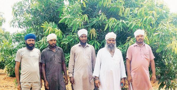 பழத் தோட்டத்தில் தர்சன் சிங் உள்ளிட்ட பஞ்சாப் விவசாயிகள். Courtesy: Hindu